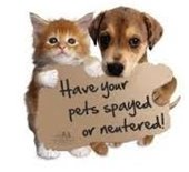 Kitten and puppy with spay sign
