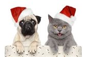 Dog and cat with santa hats