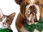 Cat and dog with green bow ties