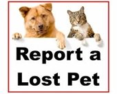 Lost pet graphic