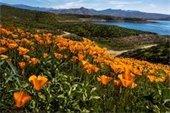 Wildflowers in Orange County