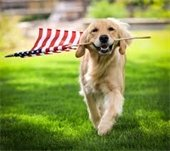 Dog carrying flag