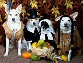 Pets in costume