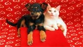 Dog and cat with heart background