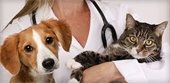 Dog and cat with vet